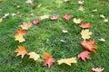 Fallen autumn leafs. Royalty Free Stock Image