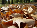 Fallen autumn leaves Stock Photo