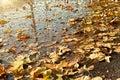 Fallen autumn leaves in water