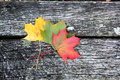 Fallen Autumn leaves on a wooden bench Royalty Free Stock Photo