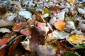 Fallen autumn yellow and red leaves, leaves fallen in autumn