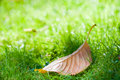 Fallen Brown Leaf
