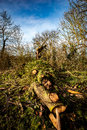 Fallen hedgerow tree large broken off leaving timber on the floor Stock Photo