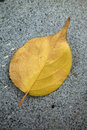 A fallen leaf on the ground Stock Images