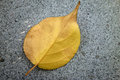 A fallen leaf on the ground Stock Photos