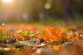 Fallen leaf and a ray of light Royalty Free Stock Photo