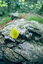 Fallen leaf on rock a yellow lying a Royalty Free Stock Photography