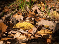 Fallen leafs in an autumn forest Stock Photography