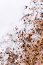 Fallen leafs and snow during winter time unique view of side by side Royalty Free Stock Image