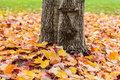 Fallen leaves around a tree trunk Royalty Free Stock Photo