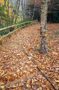 Fallen Leaves Cover Wooden Steps in a Winter Wood Royalty Free Stock Photo