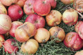 Fallen rot apples on grass Royalty Free Stock Images