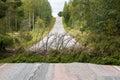 Fallen spruce tree blocking an asphalt road in Finnish countryside Royalty Free Stock Photo