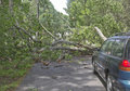 Fallen Tree Blocks Car Royalty Free Stock Photo