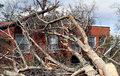 Fallen Tree on Brick House Stock Photo