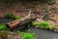 Fallen tree, bridge Royalty Free Stock Photo