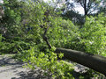 Fallen Tree After the Hurricane Royalty Free Stock Photos