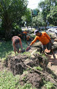 Fallen tree landscaping services officer of solo central java indonesia cut trunks that collapsed Royalty Free Stock Images