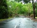 Fallen Tree Royalty Free Stock Photo