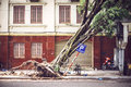 Fallen tree on street after typhoon in Hanoi, Vietnam Royalty Free Stock Photo
