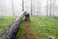 Fallen tree trunk in foggy forest Stock Photos