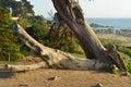 Caído árbol caso