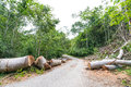 Fallen trees cut to clear path for road through tropical rainforest Royalty Free Stock Photo