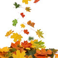 Falling autumn leaves Stock Photos
