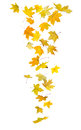 Falling autumn leaves maple isolated on white background Royalty Free Stock Photos