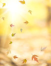Falling autumn maple leaves against yellow sunny background Stock Image