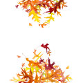 Falling autumn oak leaves heap of isolated on white Stock Images