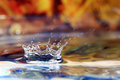 Falling drop of water Royalty Free Stock Photo