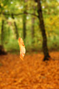 Falling leaf in forest Royalty Free Stock Photo