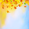 Falling leaves autumn background with maple and copy space Stock Photo