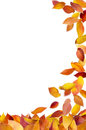 Falling Leaves Frame Royalty Free Stock Image