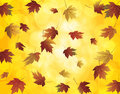 Falling Maple Leaves in Autumn Illustration Stock Photo