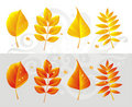 FallLeafAsp Royalty Free Stock Images