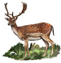 Fallow-deer Royalty Free Stock Photo