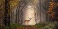 Fallow Deer In A Dreamy Forest...