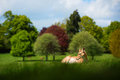 Fallow deer with trees at springtime a only one antler poses in front of an attractively coloured mass of in the taken in may Stock Photos