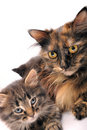 Famille de chats Photo libre de droits