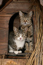 Famille des chats Photo stock