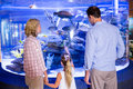 Familly looking at fish tank the aquarium Stock Photography