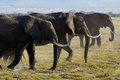 Family of african elephant Royalty Free Stock Photo