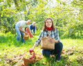 Family with apple harvest in orchard happy Royalty Free Stock Images