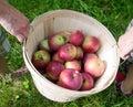 Family Apple Picking Royalty Free Stock Photo