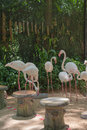 Family beautiful flamingo in the Zoo. For background Royalty Free Stock Photo