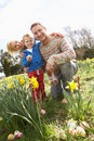 Family On Easter Egg Hunt In Daffodil Field Stock Photos