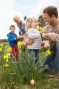 Family On Easter Egg Hunt In Daffodil Field Royalty Free Stock Photos
