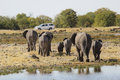 Family of Elephants walking in direction of a car in Etosha National Park in Namibia Royalty Free Stock Photo